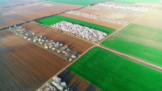 The Modern Farmer. Aerial View of An Orchard. Examining Fruit Tree Plantation Area with Drone, Organic Farm. Springtime, Agricultural Occupation, Small Business, Investment, Innovation, Using Technology, Outdoors.