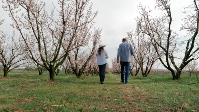 the modern farmer, slow motion of a young cheerful entrepreneurs walking in an orchard, using digital tablet. springtime, agricultural occupation, small business, investment, innovation, woman leader working, using technology, outdoors. - touchpad stock videos & royalty-free footage
