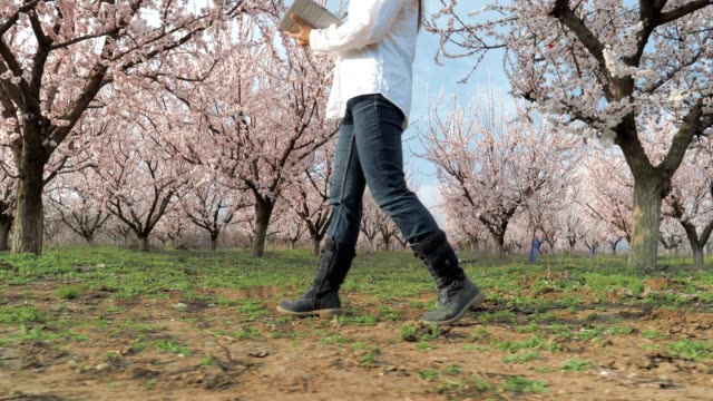 The Modern Farmer Woman, Slow motion of a Young Cheerful Entrepreneur Walking In An Orchard, Using Digital Tablet. Springtime, Agricultural Occupation, Small Business, Investment, Innovation, Woman Leader Working, Using Technology, Outdoors.