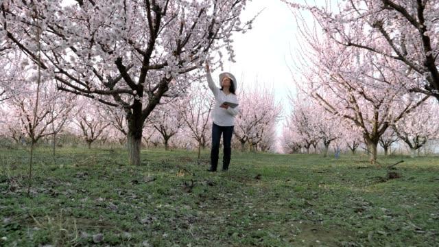 vidéos et rushes de la femme paysanne moderne, slow motion d'un jeune entrepreneur gai marchant dans un verger, en utilisant la tablette numérique. printemps, occupation agricole, petites entreprises, investissement, innovation, travail de chef de femme, utilisation de la  - rosée