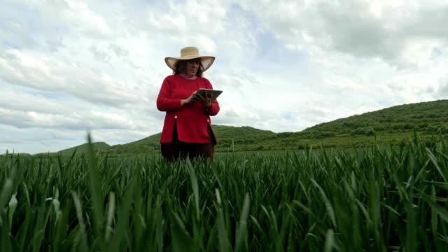 den moderna bonde kvinnan walking i en grön vete field i springtime, med hjälp av digital tablet. innovation inom jordbruket. kvinna ledare arbetar utomhus. - ansvarsfullt företagande bildbanksvideor och videomaterial från bakom kulisserna
