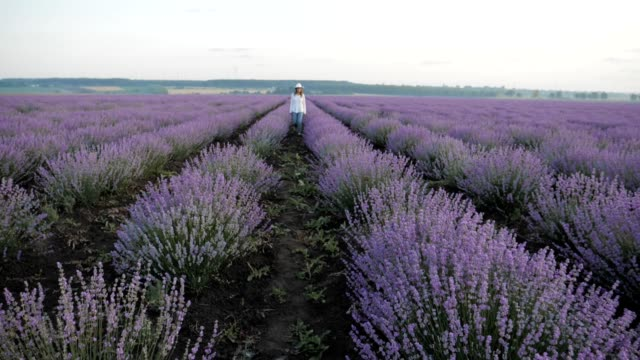 vídeos de stock e filmes b-roll de the modern farmer woman walking in her lavender fields in springtime, small business and investment, agricultural occupation. - multi coloured