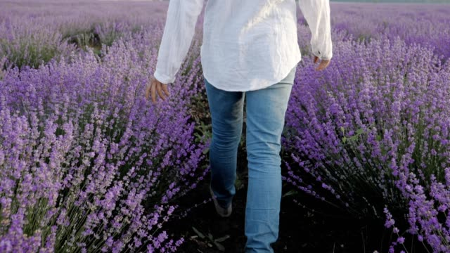 the modern farmer woman walking in her lavender fields in springtime, small business and investment, agricultural occupation. - harvesting stock videos & royalty-free footage