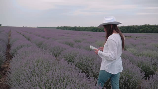 the modern farmer woman walking with her digital tablet in her lavender fields in summer, small business and investment, agricultural occupation. - white shirt stock videos & royalty-free footage