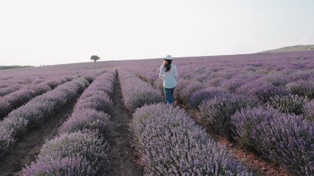 the modern farmer woman walking with her digital tablet in her lavender fields in summer, small business and investment, agricultural occupation. - agricultural occupation stock videos & royalty-free footage