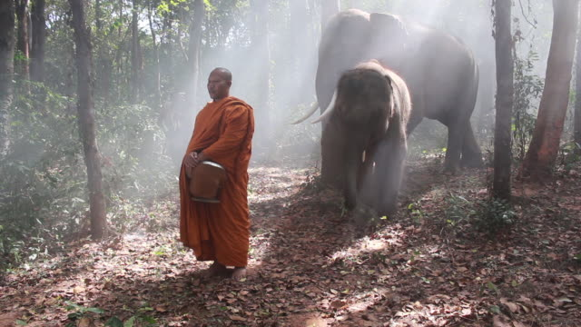 the monk of buddhism and elephant standing in forest at thailand. - zen like stock videos & royalty-free footage