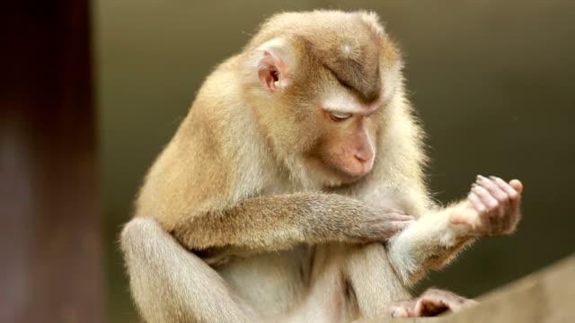 vidéos et rushes de les singes vivent dans la forêt, parc national de khao yai, thaïlande - lenteur