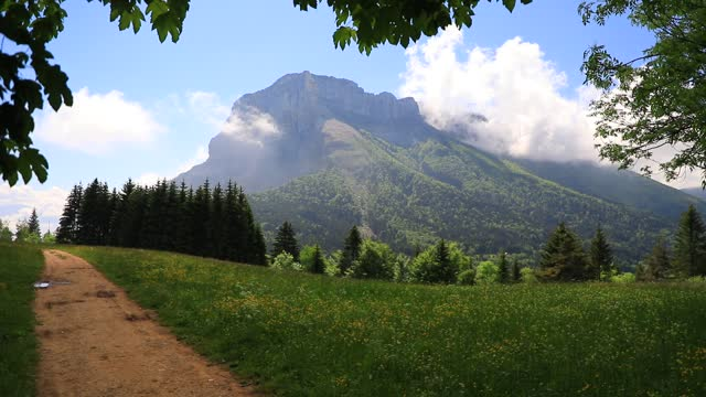 the mont granier stands above an alpine meadow on june 10, 2021 in entremont-le-vieux, france. chartreuse regional nature park is located between two... - flower head stock videos & royalty-free footage