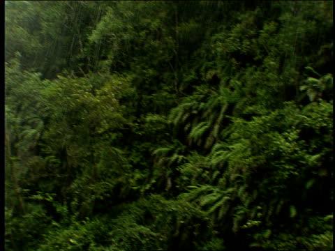 the montague waterfall splashes into a pool. - 生い茂る点の映像素材/bロール