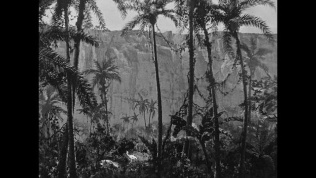 1925 the moon comes out across a jungle scene - 1925 stock videos & royalty-free footage