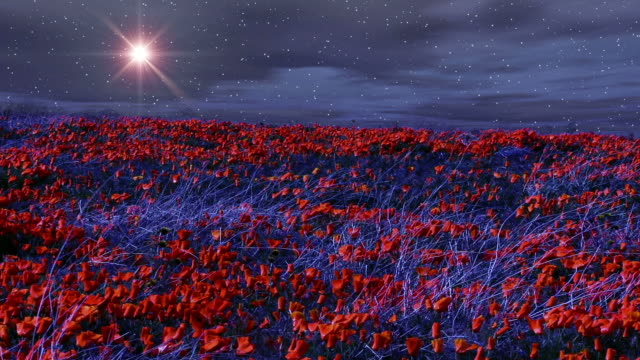 the moon glows over windy poppy fields at night. - miglioramento digitale video stock e b–roll