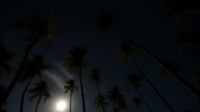 stockvideo's en b-roll-footage met the moon rises behind palm trees. available in hd. - stille zuidzee