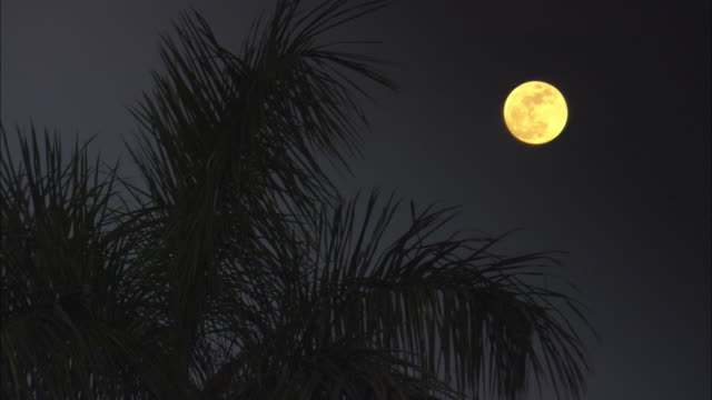 the moon shines above a palm tree rustling in a breeze. - palm tree stock videos & royalty-free footage