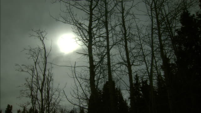 the moon shines above a silhouetted forest in canada. - whitehorse stock videos and b-roll footage