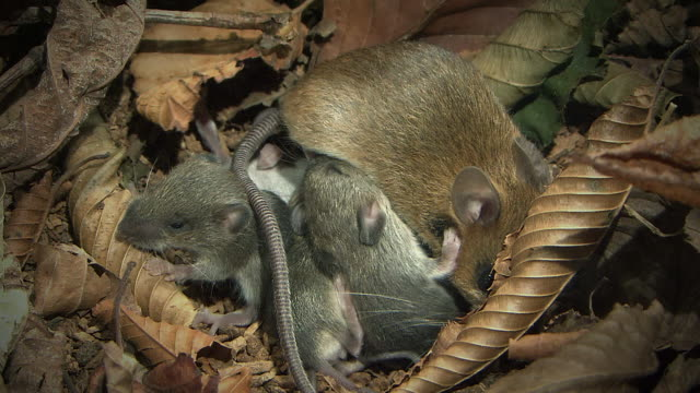stockvideo's en b-roll-footage met the mouse family in the forest - dierenverzorging