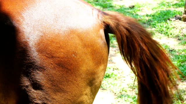 the moving tail of a horse - tail stock videos & royalty-free footage
