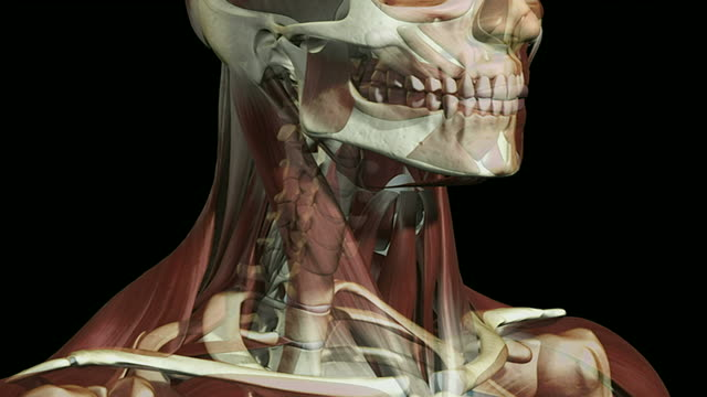 the muscles of the face - biomedical illustration stock videos & royalty-free footage