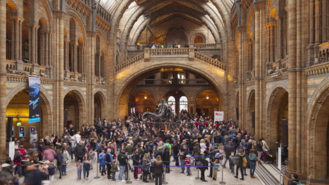 the natural history museum in london, england. - museum stock videos & royalty-free footage