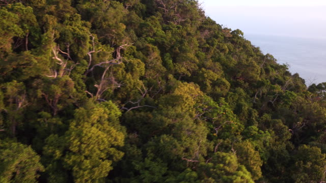 aerial: the nature of australia - fitzroy island stock videos and b-roll footage