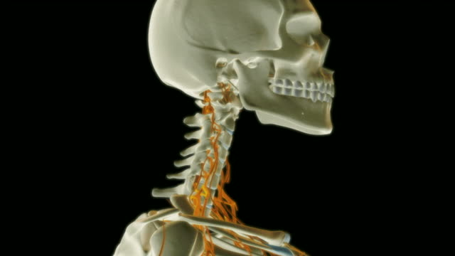 the nerves of neck. - cervical plexus stock videos & royalty-free footage