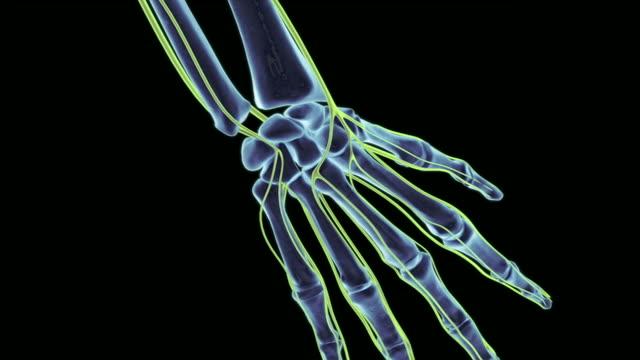 stockvideo's en b-roll-footage met the nerves of the hand - biomedische illustratie