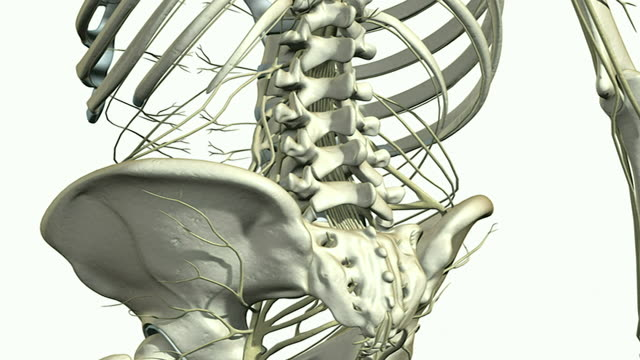 the nerves of the upperbody - biomedical illustration stock videos & royalty-free footage
