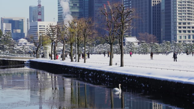 The next morning of winter snowstorm at Chiyoda-ku Tokyo Japan – January. 23 2018. Marunouchi district high-rise buildings stand behind the snowy Imperial Palace Plaza.  A swan swims on the Imperial Palace Moat.