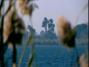vídeos de stock, filmes e b-roll de the nile river seen through bulrushes. - caniço