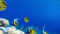 The ocean and the corals. Colorful tropical fish.