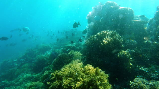 stockvideo's en b-roll-footage met de oceaan behoort tot de vis - in het water levend organisme