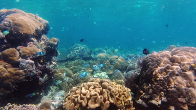 the ocean is the lifeblood of our world - zoology stock videos & royalty-free footage