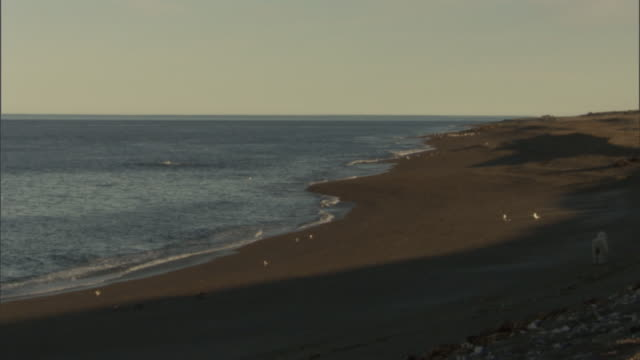 the ocean laps up on an empty beach. - provinz chubut stock-videos und b-roll-filmmaterial