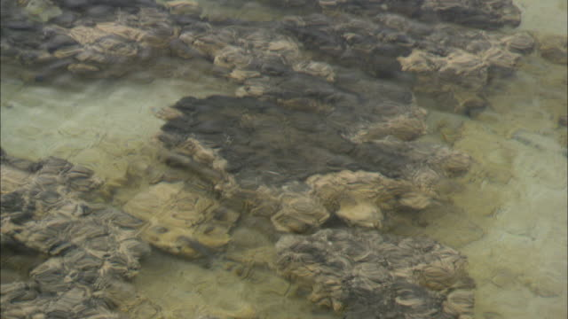 the ocean shimmers over stromatolites on the seabed at shark bay. - shark bay stock videos & royalty-free footage