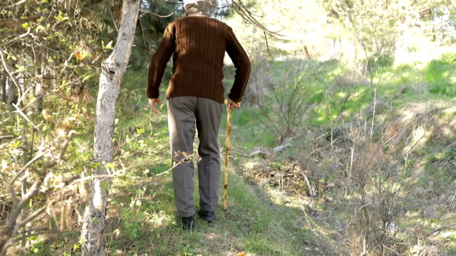 the old man is walking through the forest - walking cane stock videos and b-roll footage
