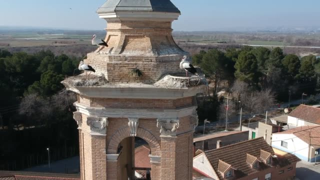 the old tower and ebro river, with birdlife - spire stock videos & royalty-free footage