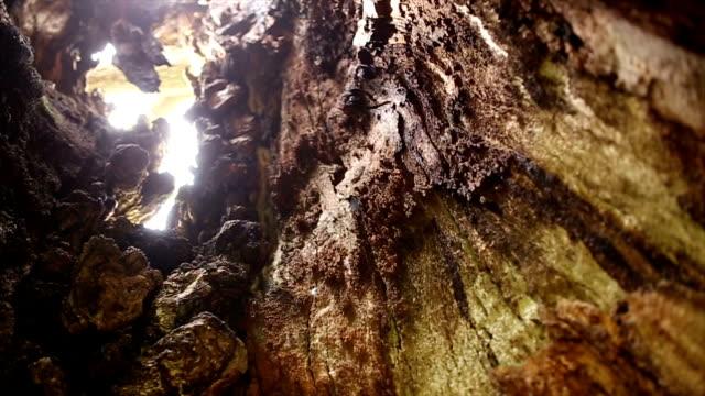 千年間古いオークの木 - 木肌点の映像素材/bロール