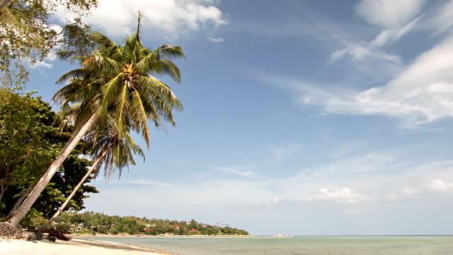 de palm bij de zee