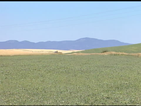 the palouse field, aka palouse prairie, green grass field, wheat field in distant bg of frame, outlines of hills/mountains bg, clear blue sky.... - palouse stock videos & royalty-free footage