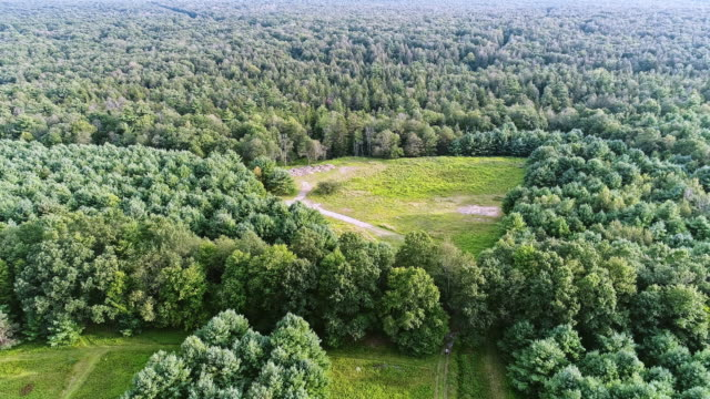 the panoramic aerial drone view to the forest in the pocono mountains at the summer sunny day. - pennsylvania stock videos and b-roll footage