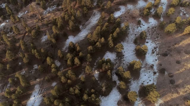 the panoramic view of the valley between mountains nearby flagstaff, arizona - pinaceae stock videos & royalty-free footage