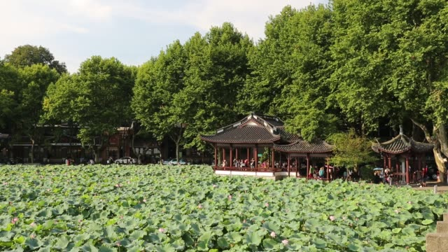 the pavilion surrounded by lotus field at lakeshore of the west lake,hangzhou,china - sacred lotus stock videos and b-roll footage