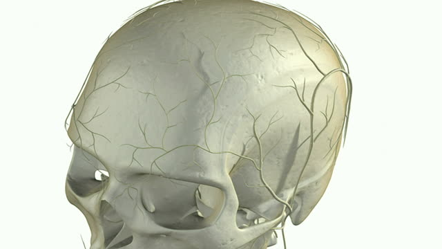 vídeos de stock e filmes b-roll de the pituitary gland - glândula pituitária