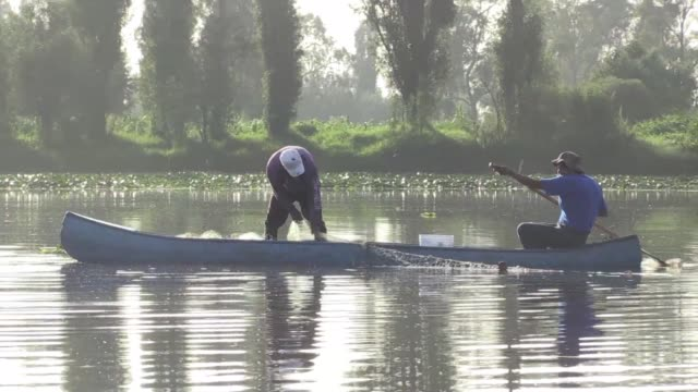 the pre hispanic xochimilco canals and their fauna are at risk of disappearing as the number of working fishermen declines as does their control over... - endemic stock videos and b-roll footage