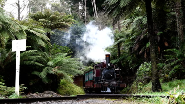 the puffing billy steam train pulls carriages of tourists along a track through the danedong ranges near belgrave, victoria in australia. - locomotive stock-videos und b-roll-filmmaterial