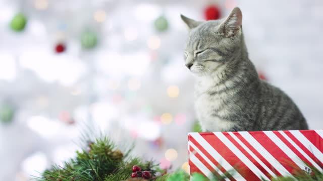 Das Purrfect Geschenk