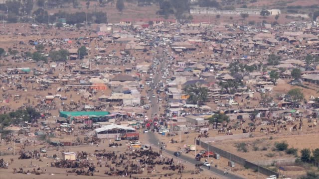 vidéos et rushes de the pushkar fair or pushkar cattle fair is an annual camel and livestock fair held in the town of pushkar rajasthan and is one of the world's largest... - dilemme moral