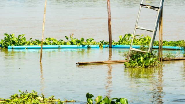 the pvc pipe floating on the water as barrier to prevent trash and water hyacinth into the riverbank. clean brown water weaving and can see smalw fish around.slow motion video. - water flea stock videos and b-roll footage