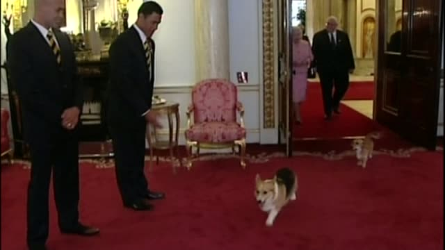 the-queen-at-90-the-queens-love-of-corgis-lib-16102007-london-palace-video-id644391760