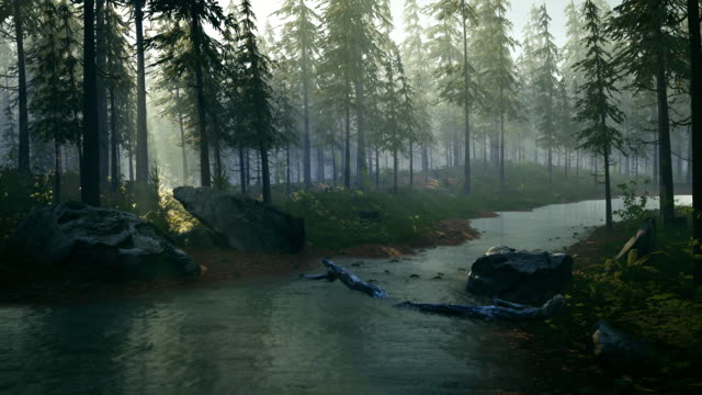 the quiet river runs throught the spruce forest at sunset - fantasy stock videos & royalty-free footage