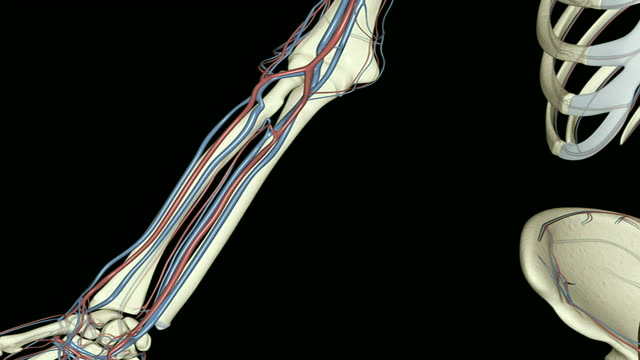 the radial artery - arteria video stock e b–roll